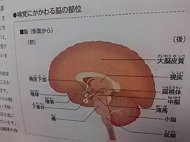 アロマ検定テキスト