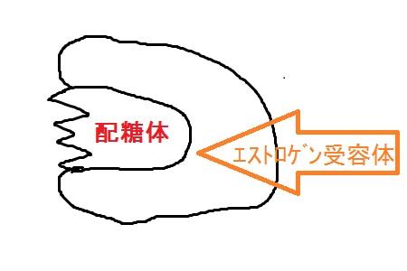 配糖体03